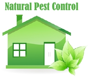 Natural Pest Control Trichy