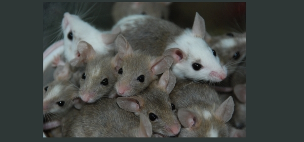 rats mice control Trichy